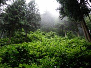【佐賀】山中で79歳女性遺体 殺人死体遺棄事件