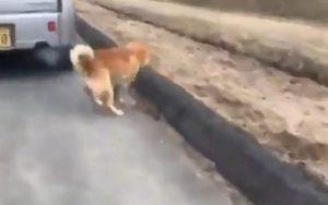 【岡山】車で犬の散歩をする動画炎上 88歳高齢者