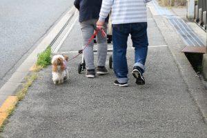 高齢者の犬の散歩は「骨折のリスク」を上げる 米調査