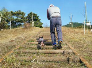 【水戸】保護された犬が介護施設で癒し 課題は訓練費