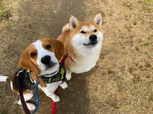 愛犬と入居ができる老人ホーム 5月18日イベント開催