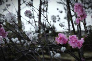 花見の帰りに老人ホームの車が電柱に衝突 82歳女性が死亡 長崎